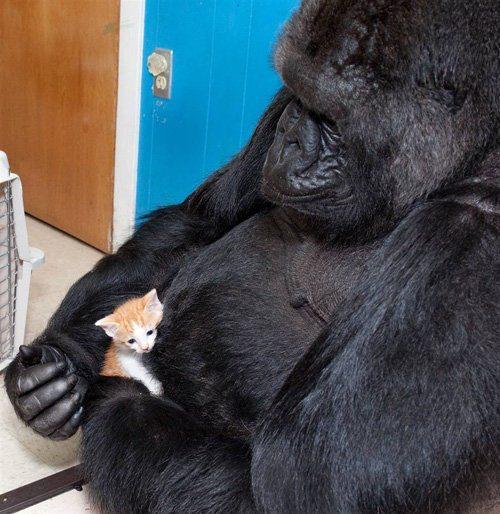 Животные знаменитости. Часть 3. Говорящие животные