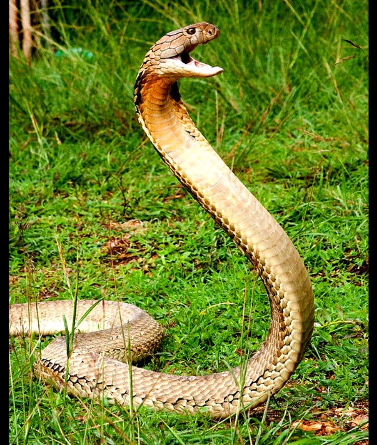 кобра скачать торрент - фото 3
