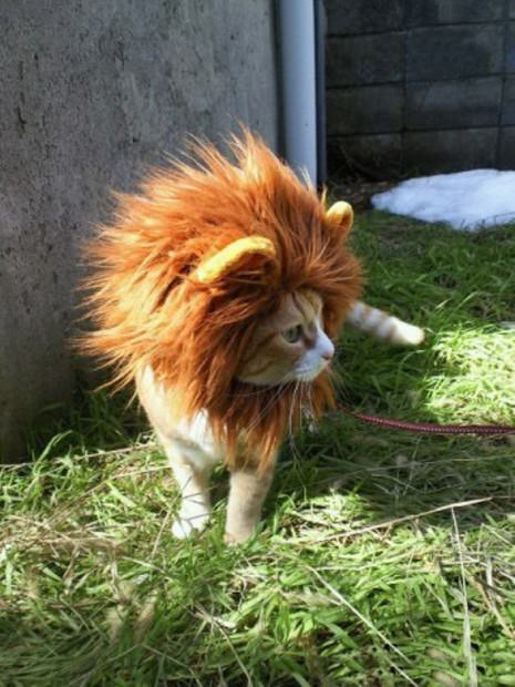 Смешные картинки животных - Выпуск № 36 (Забавные львята)