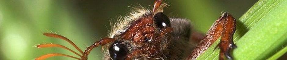 Смешные картинки животных - Выпуск № 37 (Забавные насекомые)