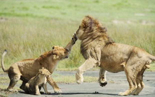 Смешные картинки животных - Выпуск № 41 (Семейные разборки)