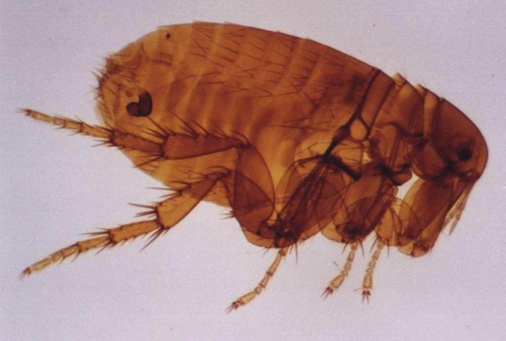 паразиты под кожей человека фото