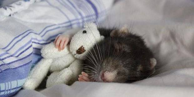 Смешные картинки животных - Выпуск № 39 (Животные  с игрушками)