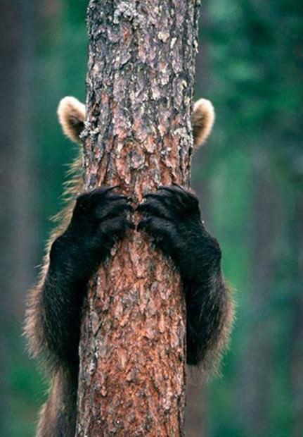 Смешные картинки животных - Выпуск № 40 (Игра в прятки)