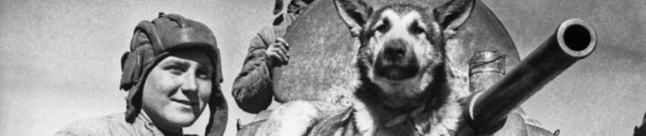 Животные знаменитости. Часть 5. Собаки – герои Великой Отечественной войны
