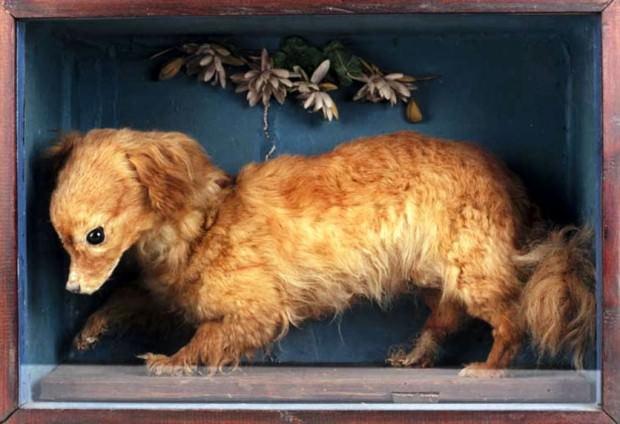 Вертельная собака (англ. Turnspit Dog)