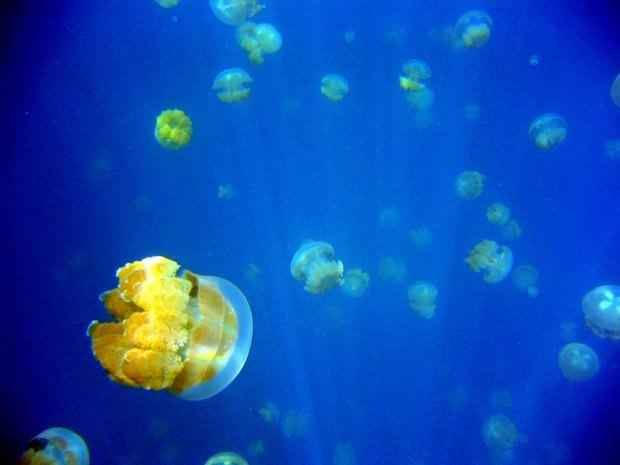 "Озеро медуз (англ. Jellyfish Lake) или ""Ongeim'l Tketau"