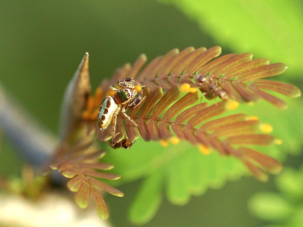 Пирсинг Клитора  31 фотография  Как делают прокол