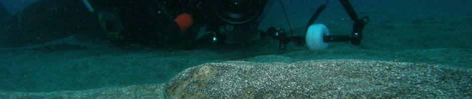 Морской ангел или европейская скватина (лат. Squatina squatina)