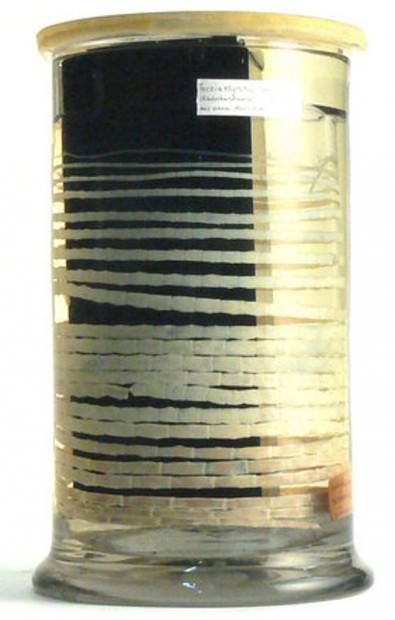 Бычий или невооруженный цепень (лат. Taeniarhynchus saginatus или Taenia solium) (англ. Tapeworm)