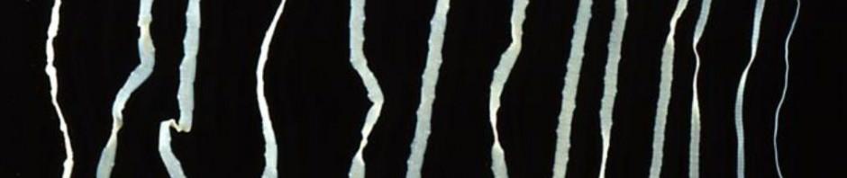 Бычий или невооруженный цепень (лат. Taeniarhynchus saginatus или Taenia solium)