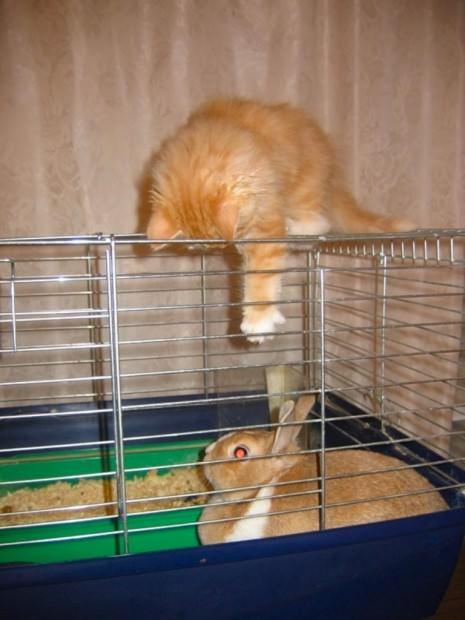 Смешные картинки животных - Выпуск № 43 (Рыжие и наглые)