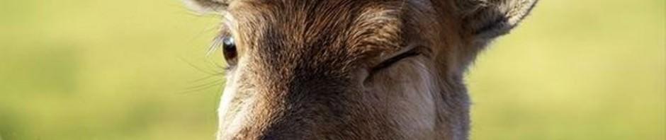 Смешные картинки животных — Выпуск № 44 (Подмигни другу!)