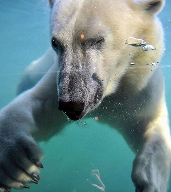 Смешные картинки животных - Выпуск № 44 (Подмигни другу!)