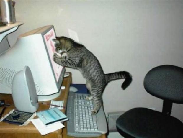 Смешные картинки животных - Выпуск № 46 (Кошки за компьютером)