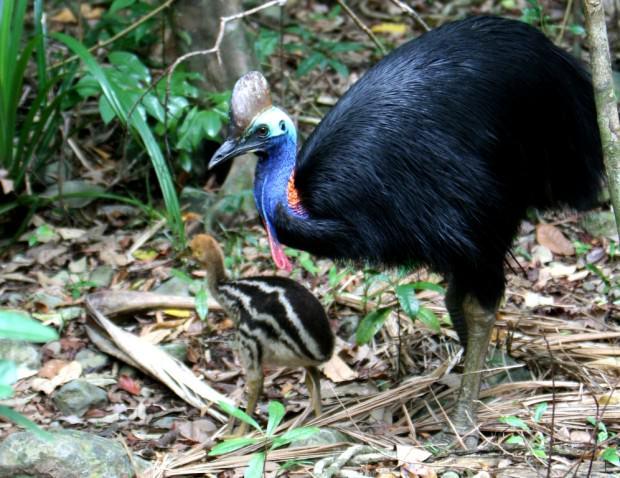 Топ-20 самых опасных животных Австралии. Часть 2.