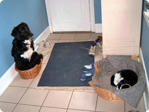 Смешные картинки животных - Выпуск № 46 (Как кошка с собакой)
