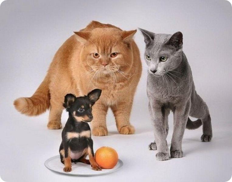 Картинки по запросу смешные картинки про животных