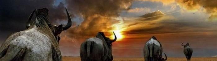 Самые опасные животные Африки. Часть 3.