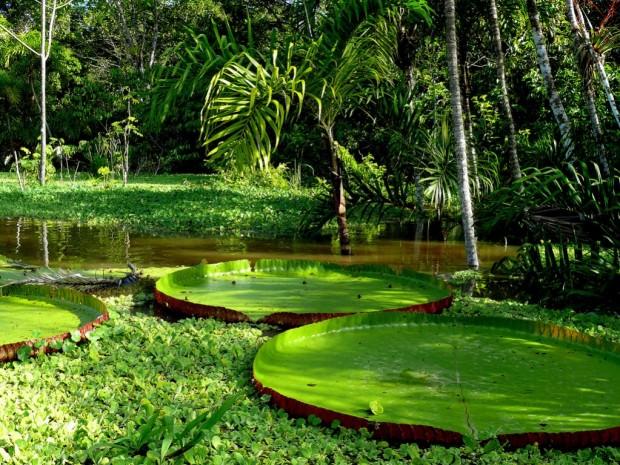 Самые опасные животные Амазонии. Часть 3.