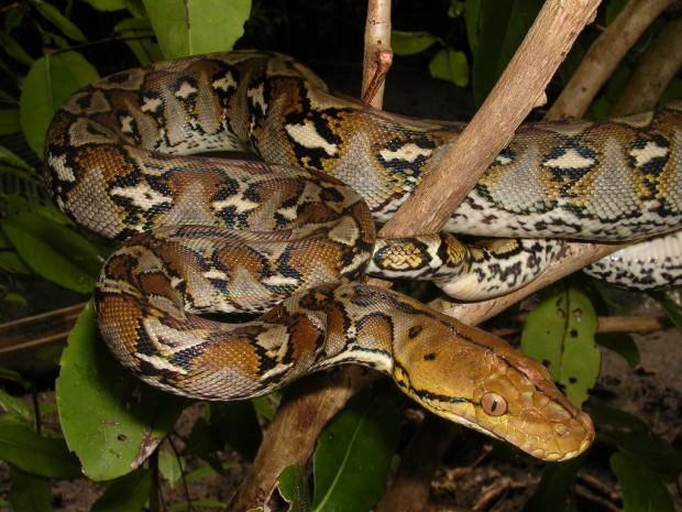 Самые опасные животные Юго-Восточной Азии. Часть 2.