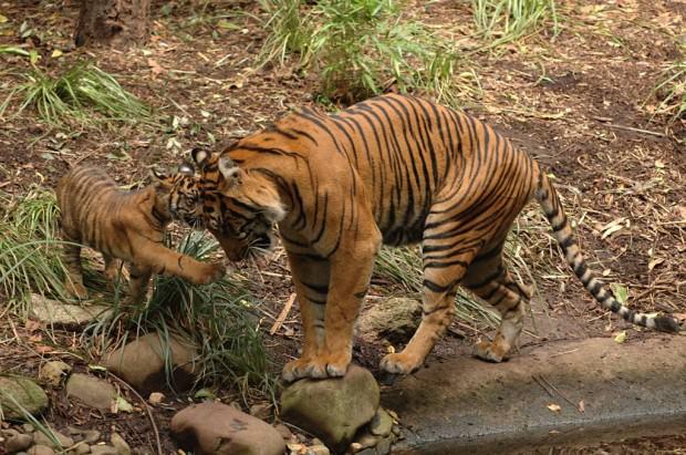Самые опасные животные Юго-Восточной Азии. Часть 3.