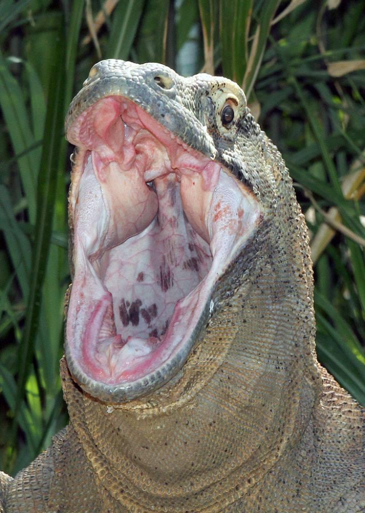 уверенно опасны ли ящерицы для человека поиск, поставщики магазины