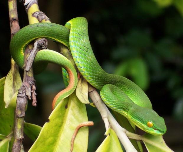 Самые опасные животные Юго-Восточной Азии. Часть 1.