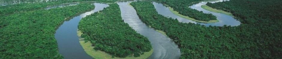 Самые опасные животные Амазонии. Часть 1.