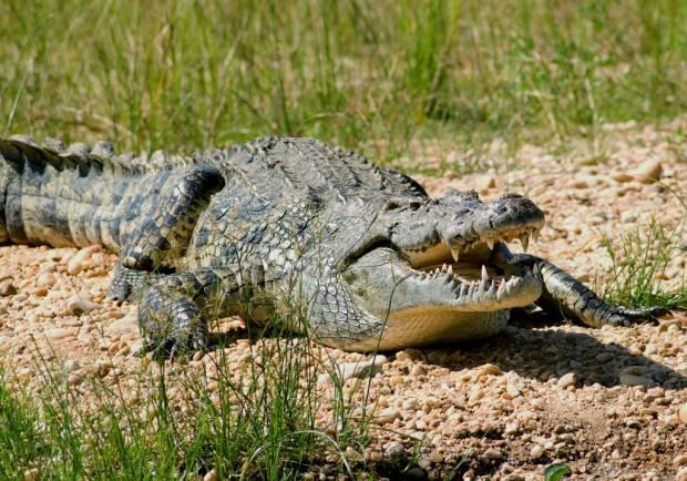 Самые опасные животные Африки. Часть 2.