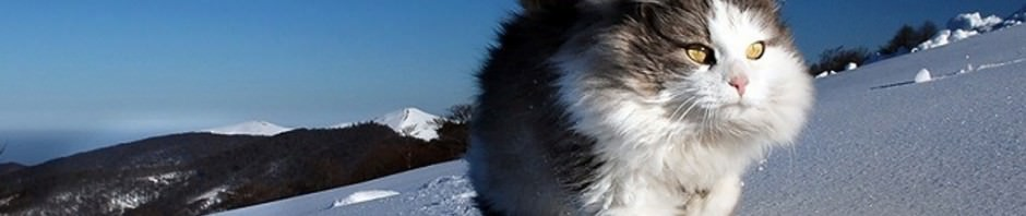 Смешные картинки животных — Выпуск № 48 (Коты в снегу)