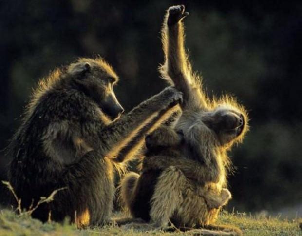 Смешные картинки животных - Выпуск № 49