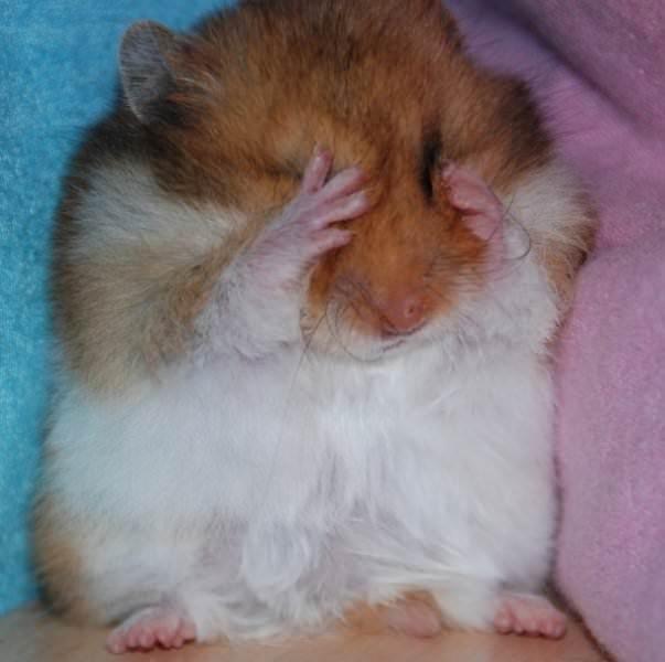 Смешные картинки животных - Выпуск № 53 (Забавные хомяки)