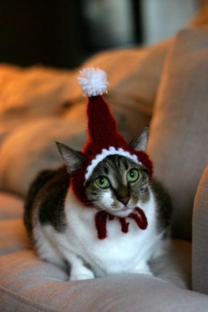 Смешные картинки животных - Выпуск № 52 (Праздничные коты)