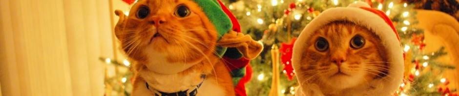Смешные картинки животных — Выпуск № 52 (Праздничные коты)